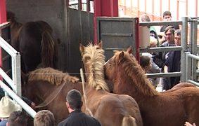 objetivos de bienestar animal en la UE para 2016