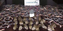 Golpe a la caza ilegal de aves protegidas con el arresto de tres personas en la provincia de Cádiz