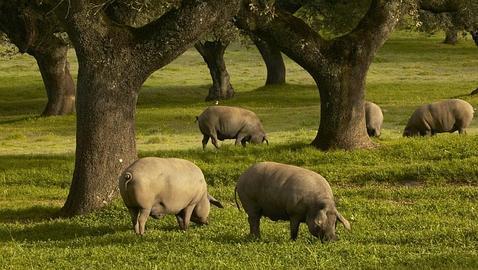 Parlamento Europeo insta a la Comisión a renovar su Estrategia de Bienestar Animal