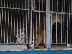 animales maltratados en circos