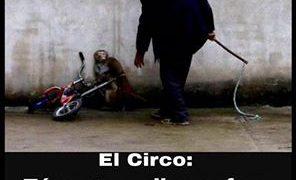 circo sufrimiento