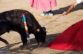 Gandía no tendrá corridas de toros este verano