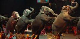 75 por ciento de españoles ya vive en territorio libre de circos con animales salvajes.