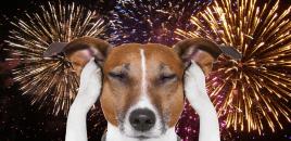 Italia ya tiene fuegos artificiales sin ruido para no molestar a los animales en las Fiestas