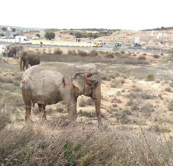 Accidente de camión cargado de elefantes de circo pone de relieve una vez más la imposibilidad de garantizar protección animal ni seguridad