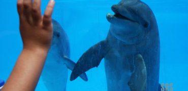 Denunciado el delfinario de Brujas (Bélgica)