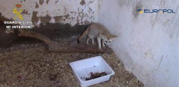 Detenidos en España 10 miembros de una red de comercio ilegal de especies protegidas que enviaban a Marruecos