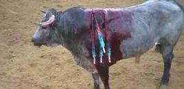 Cerrarán la plaza de toros en Quito (Ecuador) y pasará a ser un centro de eventos familiar. Rechazan el maltrato animal
