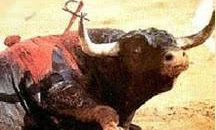 Xàtiva deja perder la ayuda de 254.000 euros para impedir que haya corridas de toros