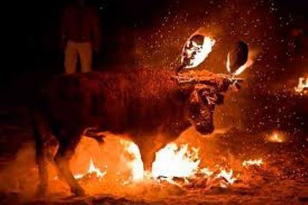 Un año más un toro ha sido maltratado en Medinaceli (Soria).