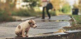 La Familia no se compra. Adopta y salva una vida.