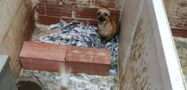 Criadero ilegal desmantelado por la Policía Nacional y Policía Local