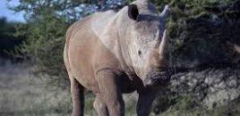 Miles de personas piden en Kenia protección para los animales en peligro de extinción
