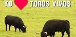 La Plaza de Toros de Estella se convierte en un espacio para perros