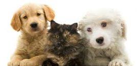 El gobierno francés otorgará a gatos y perros los derechos de un ser vivo