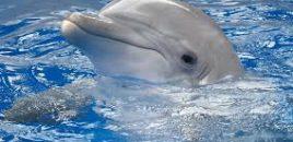 Ecuador prohíbe la importación de mamíferos marinos