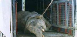 Los circos con animales salvajes tienen los días contados.
