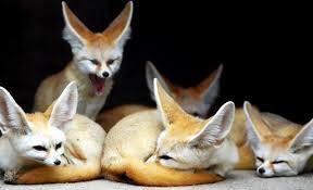 Corea del Sur considerará la adopción de una Lista Positiva para regular el comercio de animales exóticos