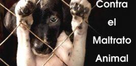 Catarroja (Valencia) se suma a la lucha por el endurecimiento de las penas por maltrato animal