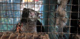 ANDA y FAADA piden a la Comisión Europea que no incluya los animales de la industria peletera dentro del nuevo Centro de Referencia de Bienestar Animal de la Unión Europea