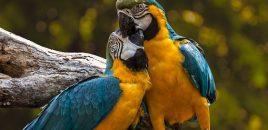 El comercio de mascotas exóticas de riesgo aumenta en Holanda y España