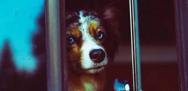La EMT confirma que los perros podrán subir al bus con sus propietarios