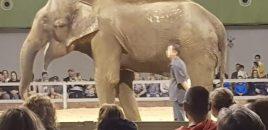 Dumba reaparece esquelética en un zoo de Sevilla