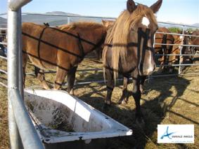 """caballos situados en la zona de """"Los Cerros de Medina"""","""