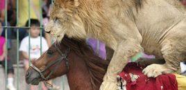 Un nuevo municipio italiano prohíbe los circos con animales