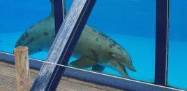 DFE llama a la eliminación para poner fin al cautiverio de cetáceos en Europa