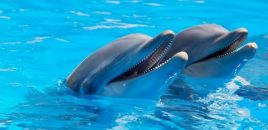 Prisión para el director y el veterinario de un delfinario por maltrato animal