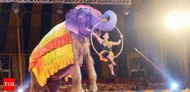 El gobierno de la India ha dado un paso más en la prohibición de animales en los circos