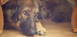 Cómo daña la pirotecnia a los animales
