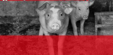 Stop the Trucks, nueva campaña para acabar con el maltrato animal en los largos transportes