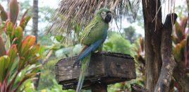 Ecuador afronta una implacable lucha contra el tráfico de vida silvestre