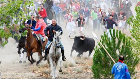 Desestimado el recurso de Tordesillas contra la Junta por prohibir el Toro de la Vega.