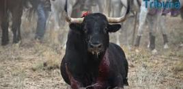 Adiós al Toro de la Vega: el Tribunal Supremo no admite el último recurso del Ayuntamiento de Tordesillas