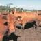 ANDA visita el mercado de ganado de Santiago de Compostela