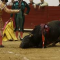 SAN FERMÍN, PAMPLONA, ¿Qué pasa con los toros después del encierro?