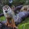 Compromís reclama mejoras en la regulación de la tenencia y comercio de especies silvestres para prevenir la expansión de enfermedades zoonóticas