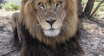Los más jóvenes cada día tienen más claro que el lugar de los animales no es el circo.