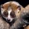 Versión digital del Libro Blanco sobre Comercio de Animales de Compañía