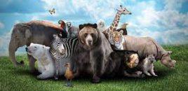 Italia prohíbe la importación, la tenencia y el comercio de animales exóticos y salvajes