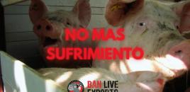 Por el fin de la exportación de animales vivos
