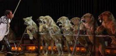 circo alfazar maltrato animal