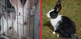 Nuevos pasos para acabar con las jaulas en la ganadería europea