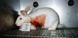 El Parlamento Europeo pide una estrategia para avanzar en el desarrollo de métodos alternativos a la experimentación animal