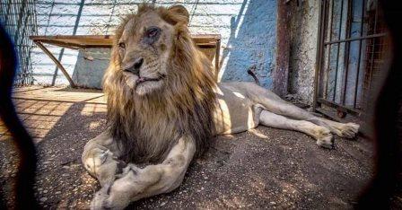 Animales maltratados y desnutridos fueron rescatados del zoológico del infierno.