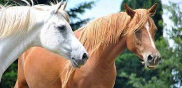 caballos libertad