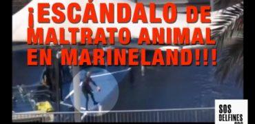 ESCANDALO MARINELAND